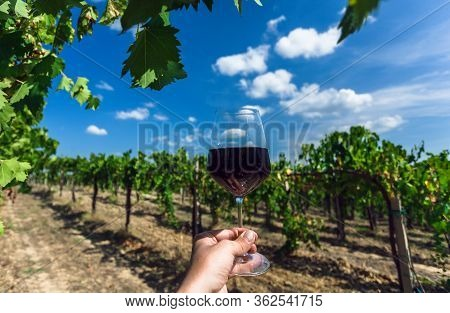 Grapevine Under White Clouds And Wine Glass In Hand Of Farmer. Cheers At Sunny Day In Green Vineyard