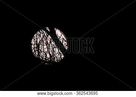 Full Moon At Night, Viewed Through Tree Branches
