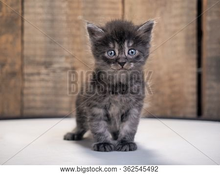 A Small Kitten With A Pleading Look
