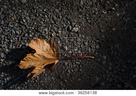 A Single, Orange, Fallen Autum Leaf