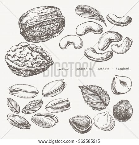 A Hand-drawn Large Set Of Exotic Nuts. Pistachios, Cashews, Hazelnuts, Walnuts Vector Illustration O