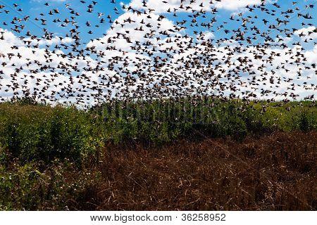 Birds In The Field