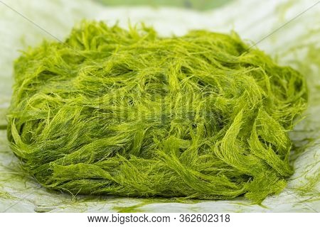 Freshwater Green Algae Scientific Name Is Spirogyra Sp. On Banana Leaf