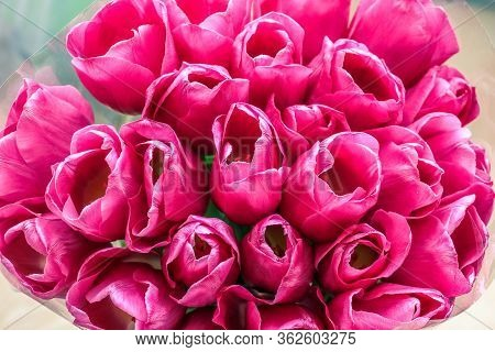 Bunch Of Fresh Spring Pink Tulips. Close-up Of Closely Bundled Tulips.