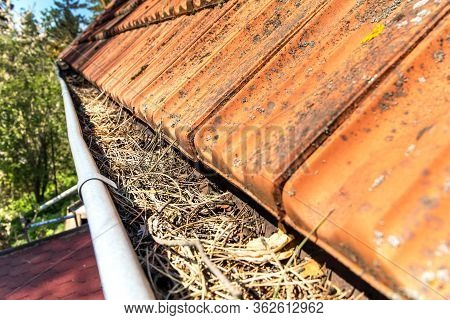 Gutters Full Of Debris Needing To Be Cleaned. Roof Gutter Clogged With Pine Needles And Debris. Work