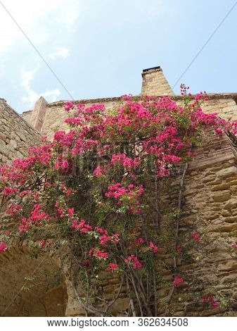 Pink Flowers On Stone House In The Village Of Pals, Located In The Middle Of The Emporda Region Of G