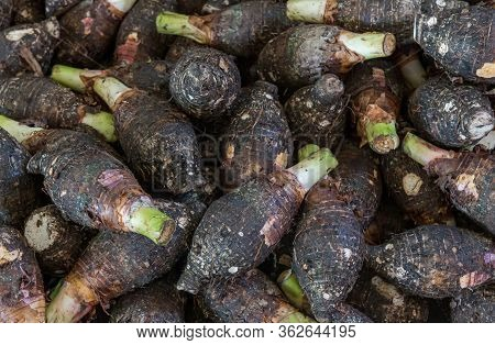 Raw Fresh Taro Pile . Group Of Stcking Raw Taro (yautia Lila), Close-up Fresh Japanese Taro In Fresh