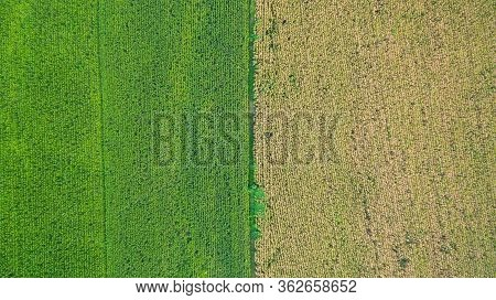 Aerial Top View Of A Different Agriculture Fields In Countryside On A Spring Day. Drone Shot Top Vie