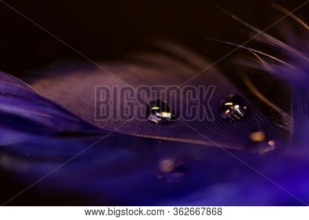 Macro Water Drops On Plume On Dark Background, Abstract Concept.