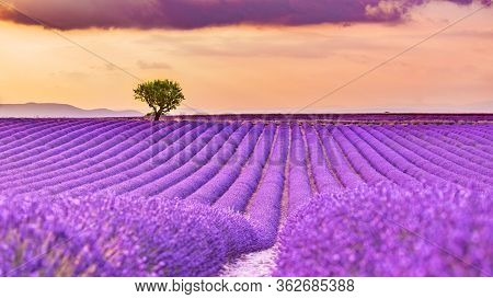 Wonderful Nature Landscape, Amazing Sunset Scenery With Blooming Lavender Flowers. Moody Sky, Pastel