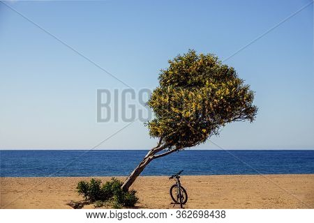 A Solitary Tree With Yellow Flowers On A Sandy Beach