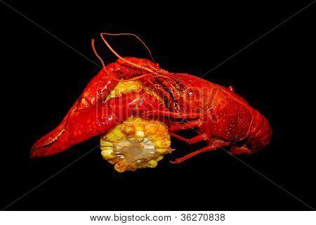 Red Crawfish