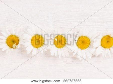 Fresh White Chamomile Daisy Flower Pattern On White Wooden Background
