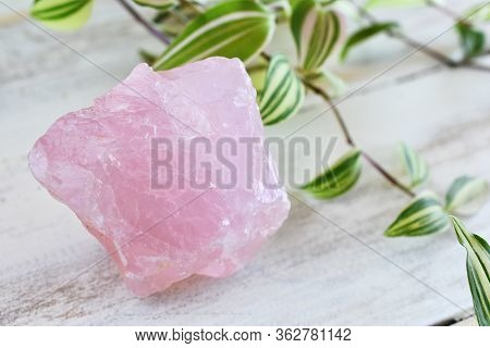 A Close Up Image Of A Single Large Rose Quartz Crystal And A Lush Green Plant On A White Background.