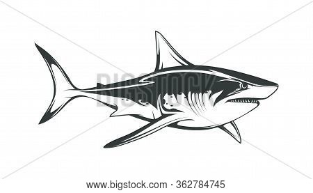 White Shark. Saltwater Fish. Eater Shark. Carcharodon. Big Aggressive Shark. Fish A Shark A Side Vie