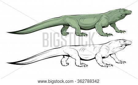 Komodo Lizard. Illustration Of Varan. Komodo Dragon. Komodo Monitor, Is A Species Of Lizard. A Membe
