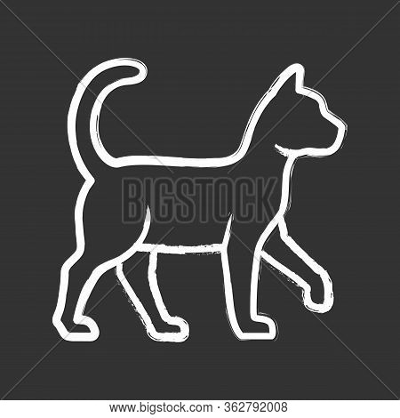 Witch Cat Chalk Icon. Sorceress Pet. Magic Cat. Witchcraft And Sorcery Symbol. Isolated Vector Chalk