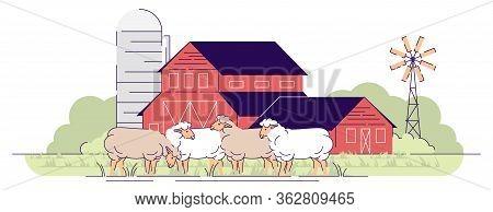 Sheep Farm Flat Vector Illustration. Livestock Farming, Animal Husbandry Cartoon Concept. Sheeps Gra