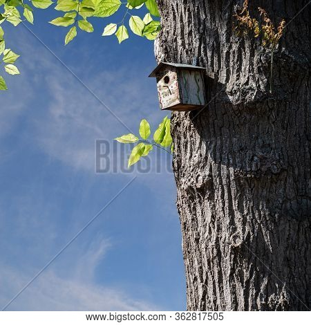 Bird House On Pole. Birds Nest To Protect Birds Raising Their Nestlings