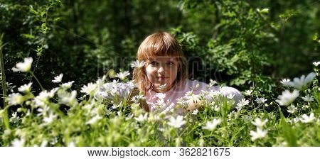 Little Girl In A Meadow Among Wildflowers. Wildflowers Are White. Stellaria Is A Genus Of Flowering