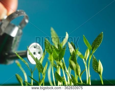 baby plant growing with blue color background