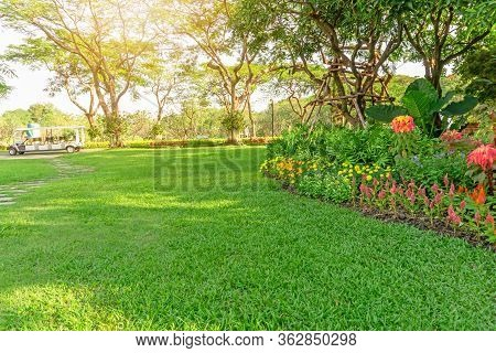 Smooth Green Grass Lawn In Good Care Maintenance Garden, Flowering Plant, Shurb And Trees On Backyar
