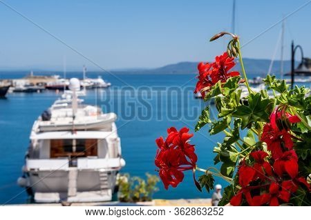 Red Flower Over The Sea Lagoon Of Orbetello, With Defocused Luxury Yacht On Background. Sunny Day In