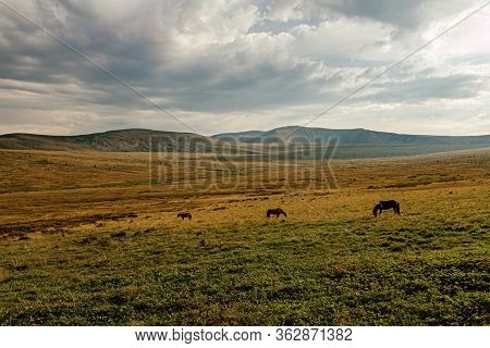 Three Horses In Mountain Valley Grazing At Halt