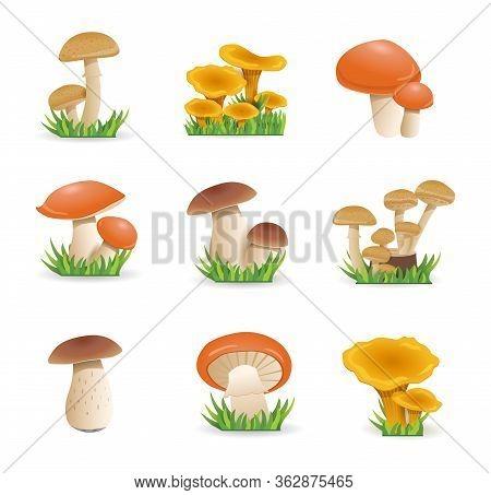 Set Illustration Mushrooms. Edible Mushrooms Chanterelles, White Fungus, Boletus.