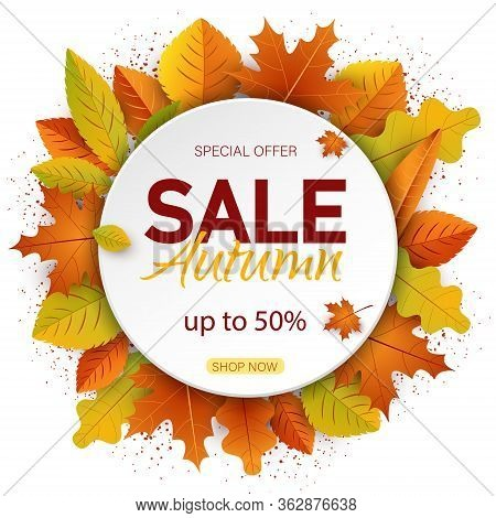 Autumn background. Sales banner with autumn leaves vector banner. Banners with fall leaves. Autumn season discount offers with red and orange realistic foliage. Colorful leaf design vector seasonal autumnal sale abstract tag templates