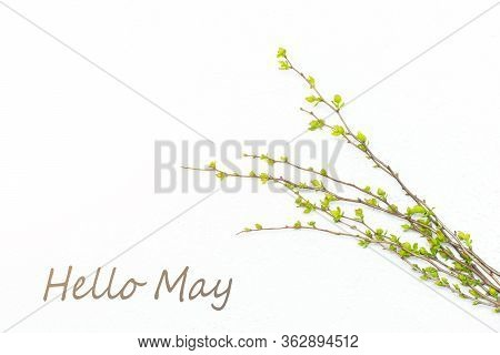 Hello, May May Banner With Place For Text. Layout Branch Of A Bush. Natural Young Green Leaves On Bl