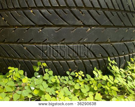 Pattern Of Tyre Above Small Plant