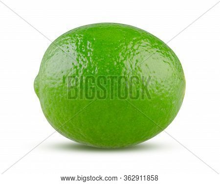 Fresh Lime On White Background. Perfect Shiny Lime Close Up Isolated. Whole Green Citrus Fruit Isola