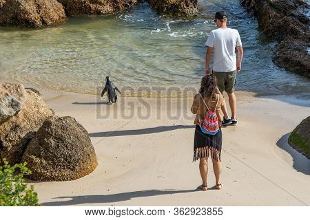 A Couple Beside African Penguin Or Jackass Penguin At Boulders Beach South Africa Make Pictures