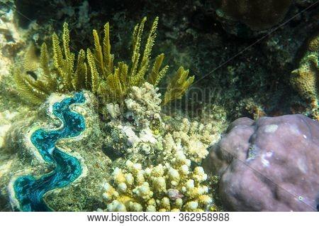 Underwater Sealife Great Barrier Reef Cairns Australia