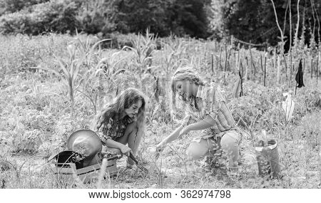 Planting And Watering. Girls Planting Plants. Agriculture Concept. Growing Vegetables. Planting Vege