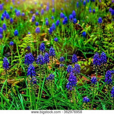 Ooh That Blue- Like A Breath Of Freshness, Such A Peaceful Scene Of Blue