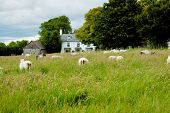 Flock of sheep on the green meadow in front of little village poster