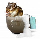 Funny chipmunk taking a bath bathroom concept poster