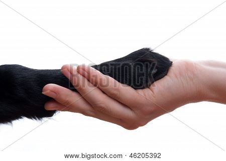 Handshake Between Dog And Hand
