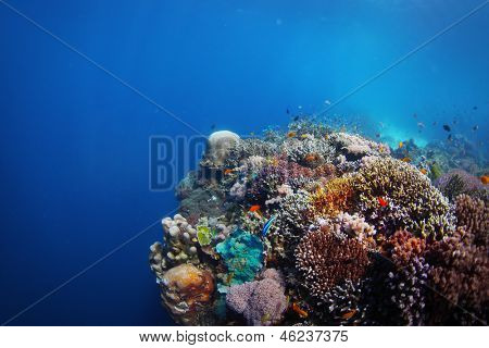 Coral reef in a tropical sea. Philippines, Balicasag island