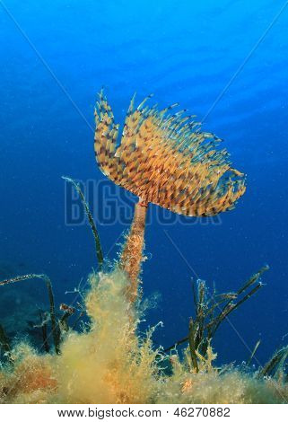 Tube Worm Underwater poster