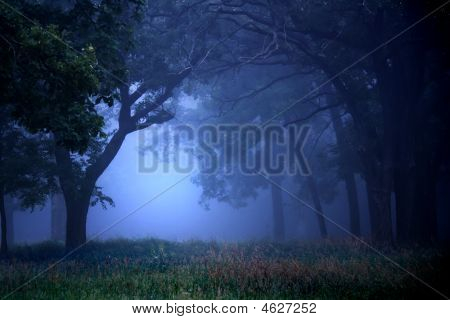 Deep Blue Forest At Dawn