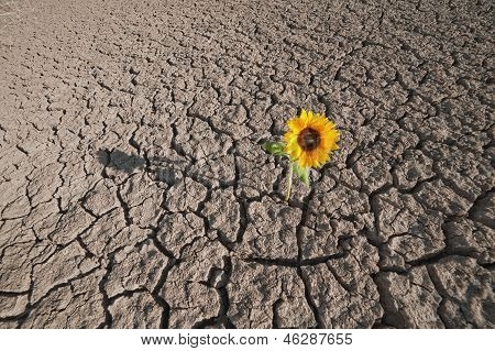 dry soil of a barren land and single growing plant poster