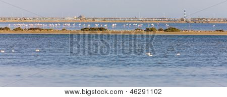 flamingos in Camargue, Provence, France poster
