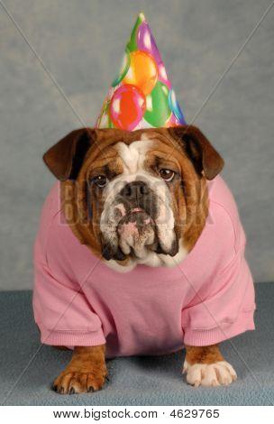 Bulldog Birthday Dog