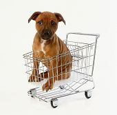 Dog in shopping trolley image was shot using Nikon 30D poster