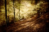 a mystical landscape in a beautiful beech forest poster