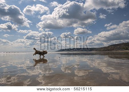 Beach Reflections With Dog.