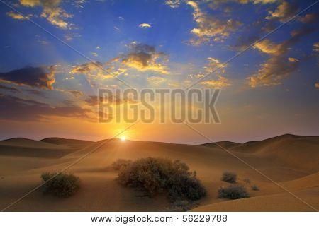 sunrise in Tar desert India